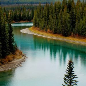 bow-river-canada-forest-219972